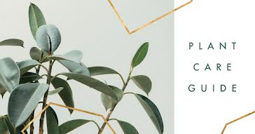 Plant Care Guide - Facebook Event Cover Template