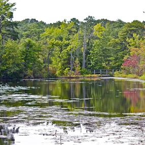 A Painter's Palette by Susannah Lord - Landscapes Waterscapes ( colors, reflected, palette, lake, painter's,  )