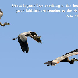 Psalm 57:10 by Steven Faucette - Typography Quotes & Sentences ( bible, wood stork, old testament, psalms, scripture )
