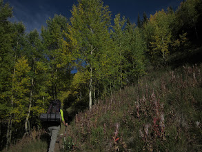 Photo: Aspen tunnels heading up Trail Rider pass.