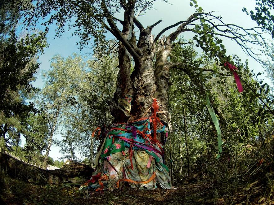 Цар-дерево