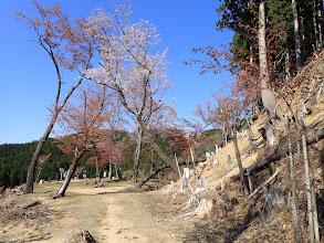途中の展望場と桜