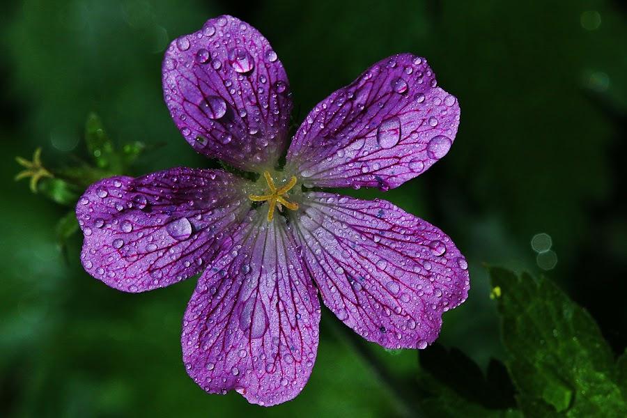 by Leonard Paul Hanoch - Flowers Flowers in the Wild