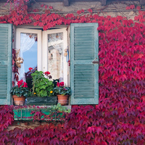 Autumn at the window by Andrea Magnani - Buildings & Architecture Homes ( leaves, plants, autumn colors, decorations, autumn, house, wall )