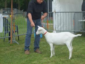 Photo: Rubriek 1: witte lammeren geboren tussen 8-2 en 16-3 2013. Maisy 37.