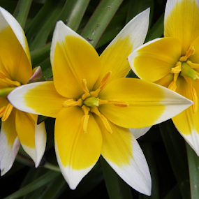 by Rita Bugiene - Flowers Flower Gardens (  )