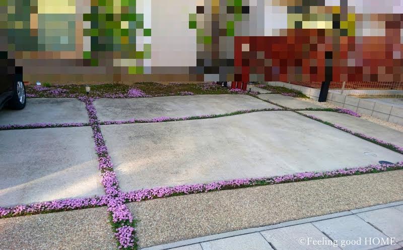 2019.4.22の庭(レイタータイムの生育状況)画像