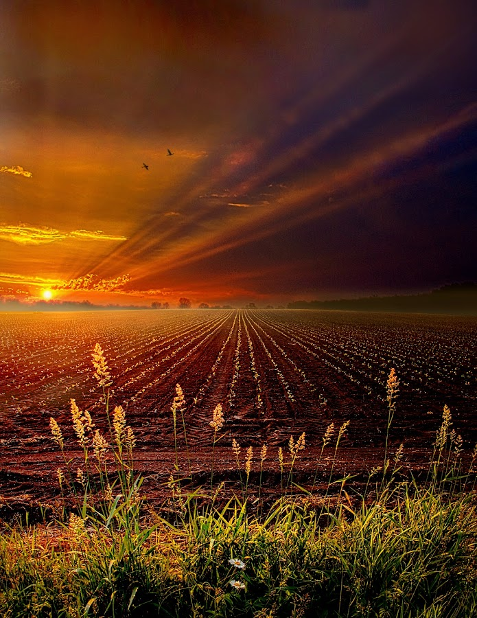 Take It To The Limit by Phil Koch - Landscapes Prairies, Meadows & Fields ( wisconsin, vertical, natural light, summer. spring, photograph, farmland, yellow, phil koch, leaves, spring, sun, photography, farm, love, nature, autumn, ice, snow, horizons, flowers, inspired, clouds, office, orange, green, twilight, agriculture, horizon, scenic, morning, portrait, field, environment, red, winter, season, blue, national geographic, sunset, serene, peace, fall, meadow, earth, sunrise, landscapes, floral, inspirational, , hdr, HDR, Landscapes, Hope, vertical lines, pwc )