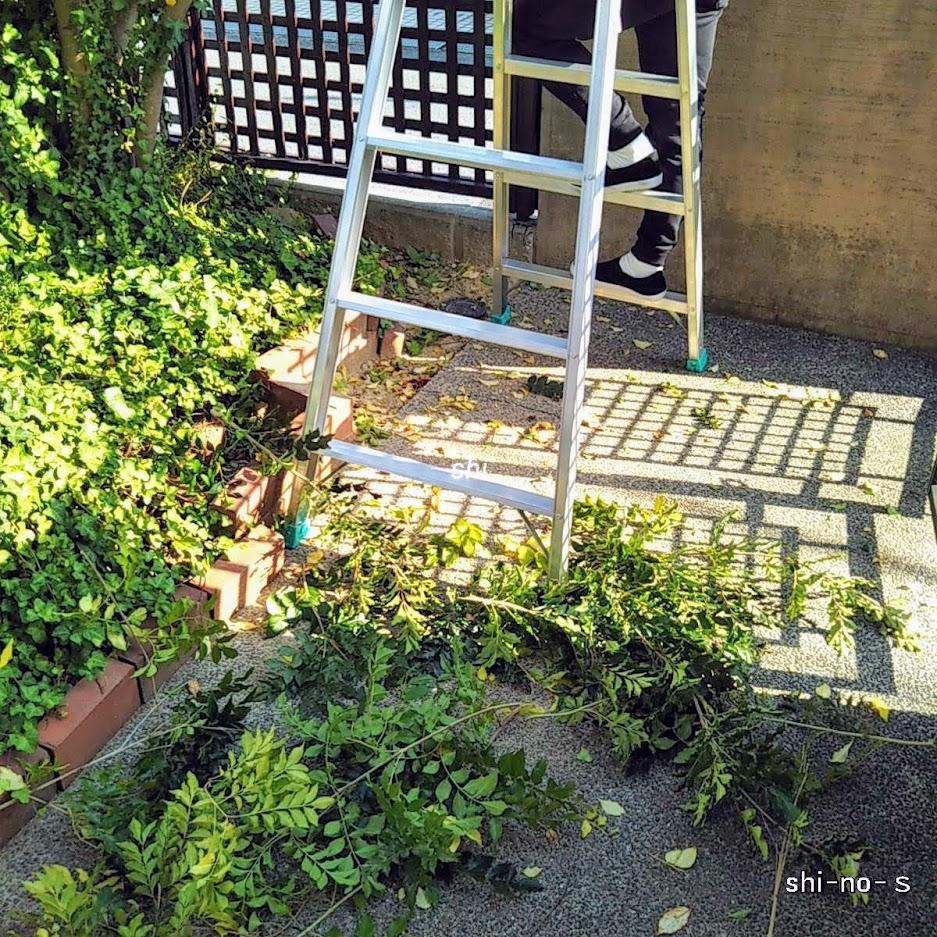 植木の剪定で地面に落ちた枝