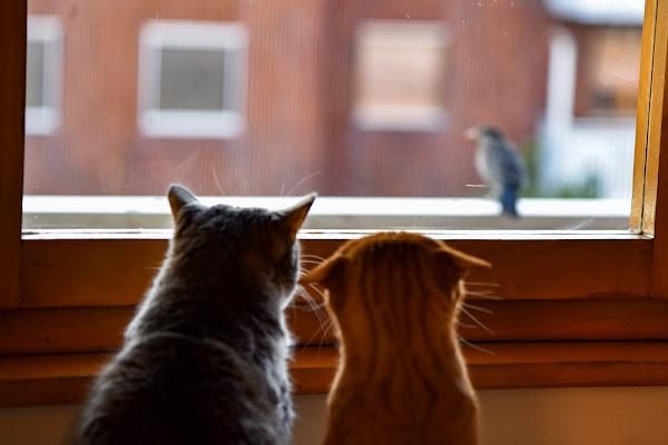La mia finestra sul mondo: le mie gatte, il mio balcone di Highlander