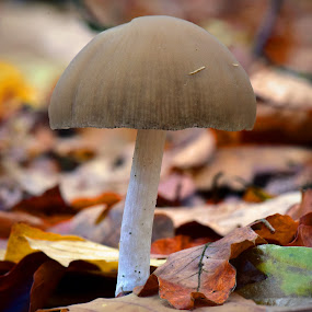 Left Alone ! by Marco Bertamé - Nature Up Close Mushrooms & Fungi ( mushroom, red, single, autumn, green, fall, brown, yellow, leaves, alone )