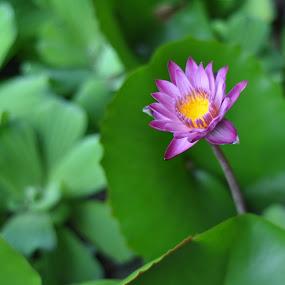 by Raja Lazuardi - Nature Up Close Flowers - 2011-2013