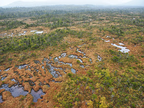Photo: Patterned fen wetland, in mosaic of bog woodland and bog