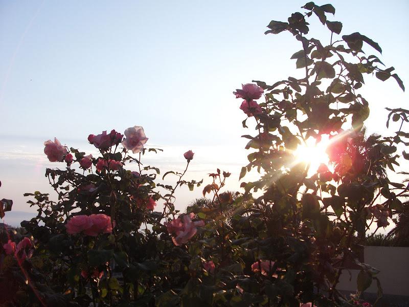 The sun will rise again... di Feder