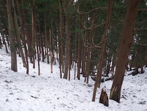 下に林道が見えて