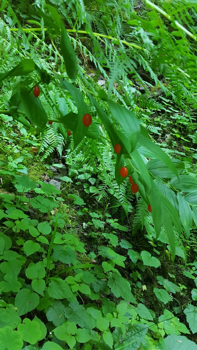 unidentified berries