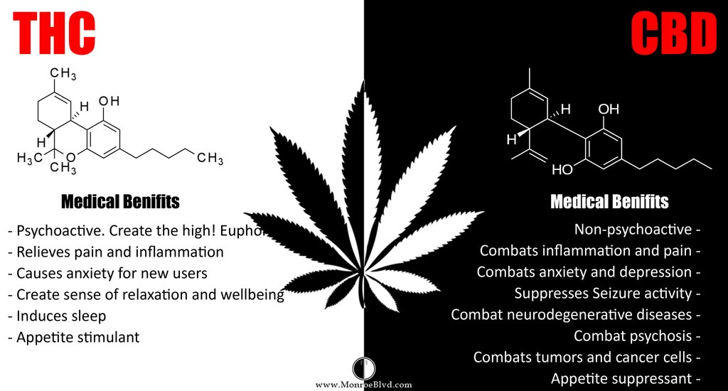 THC vs CBD Medical Benefits