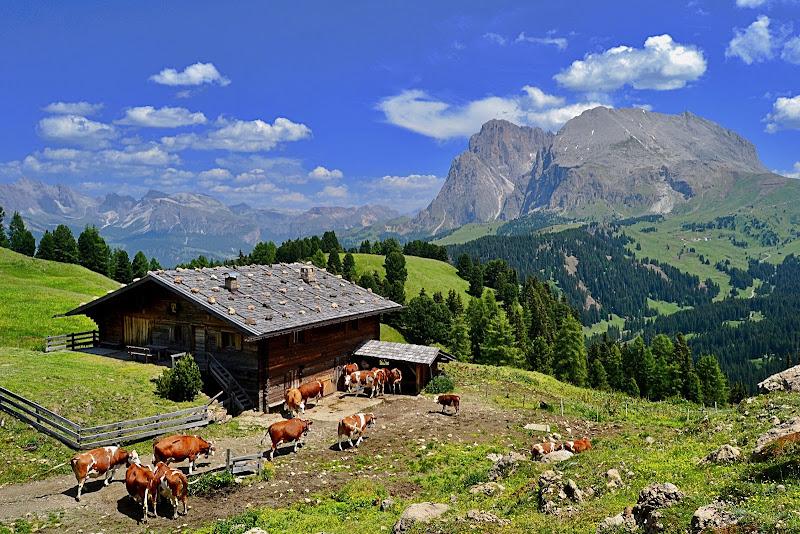 Latte di Alta Montagna di giuseppedangelo