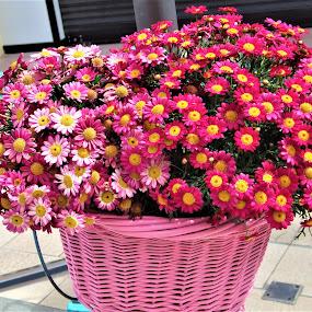 Small pearls in a basket by Elenka Smilenova - Flowers Flower Arangements ( macro flowers garden spring )