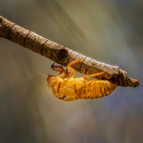 Time to Split by Jim Merchant - Animals Insects & Spiders ( shed, shell, nature, beauty in nature, insect )