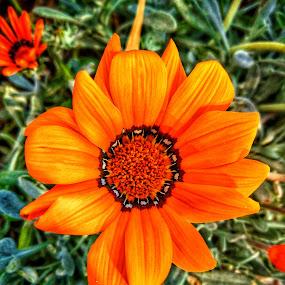 by John Bonanno - Flowers Flowers in the Wild
