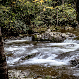 by Jackie Eatinger - Nature Up Close Water ( smokie mountains, tremont institute,  )