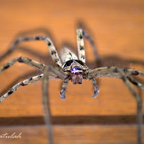 4WD by Firdian Rahmatulah - Animals Insects & Spiders