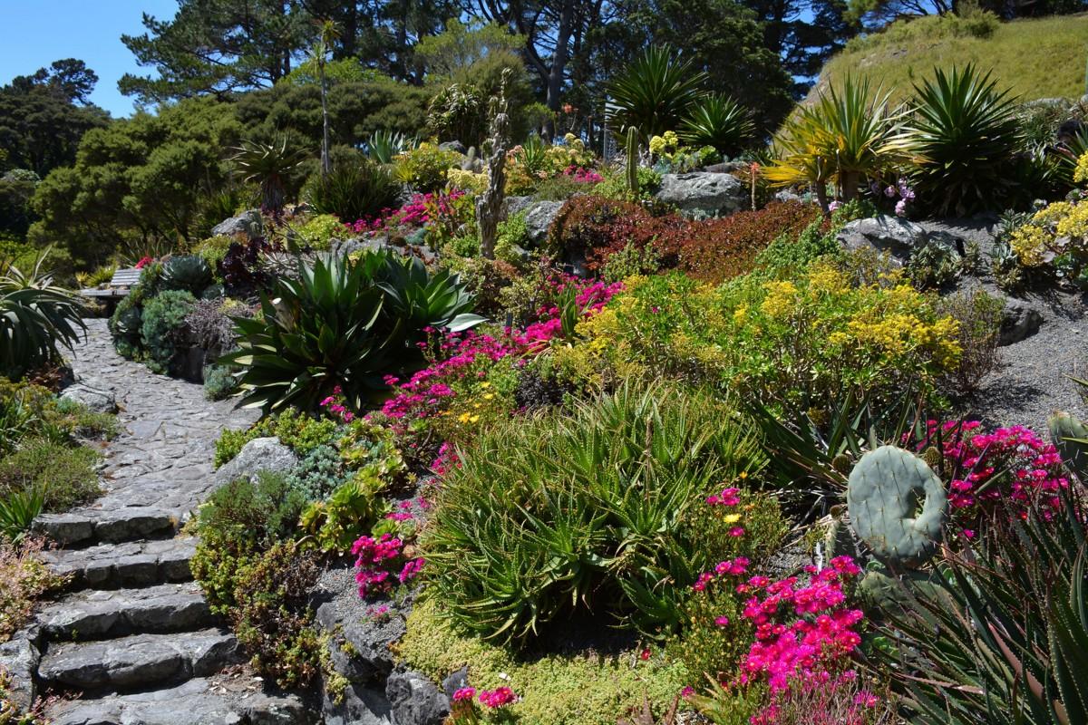 dry garden, giardino asciutto, cactus, bassa irrigazione, perenni