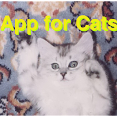 Ball App for Cats
