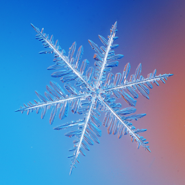 Snow Crystal by Skip Spurgeon - Abstract Macro ( icewater, snow crystal, snow, snowflake )