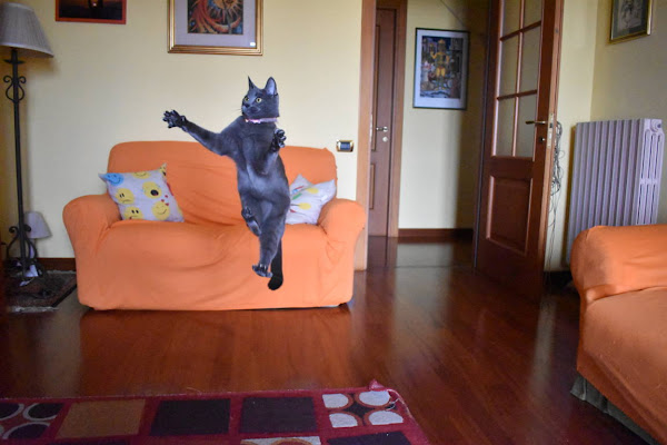 Salti rapidi felini di carm_ian_