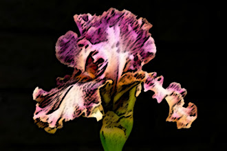 Photo: Sumi-e (15/2/5) - ruffled violet iris