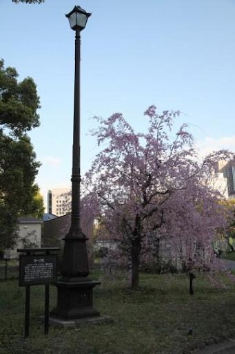 東京 日比谷 桜 Tokyo Hibiya Sakura