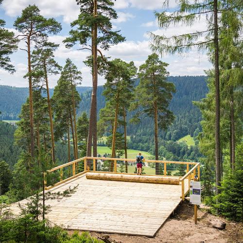 Unterwegs in den Heidelbeeren oberhalb von Enzklösterle - Urlaub Schwarzwald