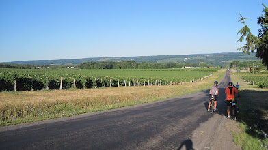 Photo: Day 4 - Long downhill and vineyards