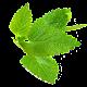 Şifalı Bitkiler (İnternetsiz) (app)