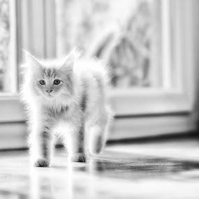 Die Katze by Ani Desu - Animals - Cats Portraits