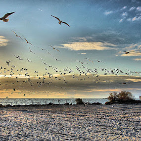As The Sun Sets by Terry Davey - Landscapes Waterscapes ( sunset, beach, gulls )