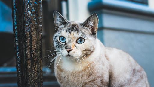 Cute Cat Live Wallpaper: fondos de pantalla hd capturas de pantalla 10