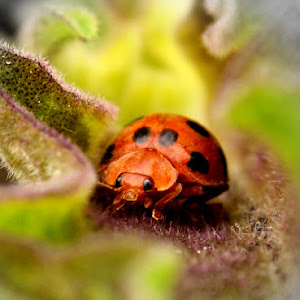 beetle be.jpg