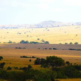nature landscape by Nagaraj Kukke - Landscapes Forests ( landscape )