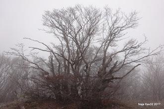 """Photo: Pozdravi nas drevje v burji """"sklesano"""" ..."""