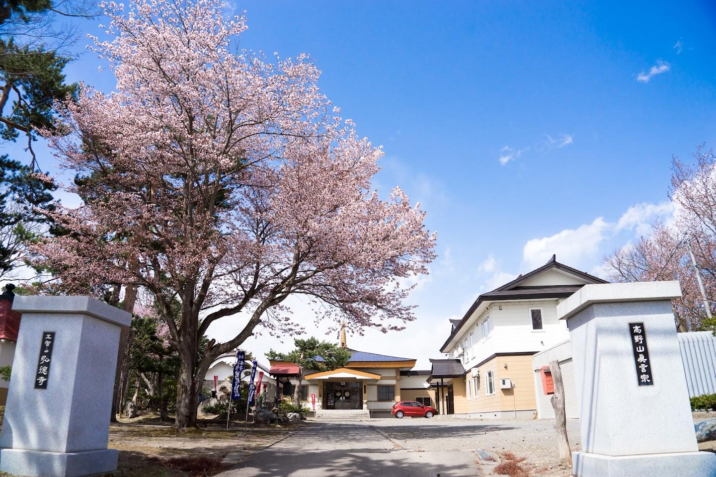 弘徳寺(第九番札所)の桜