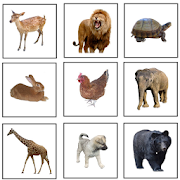 First Animals (in 5 languages)