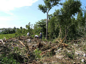 Photo: 2006 Orchid rescue from already felled trees, between Newport Avenue and Windsor Park, Feb. 1, 2006