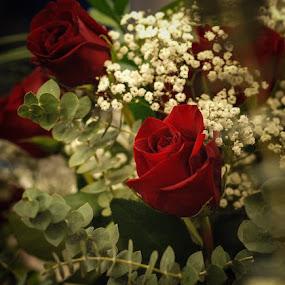 by David  Clayton - Flowers Flower Arangements ( red, flowers, rosebud, red rose, rose, roses, red flower,  )
