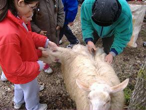Photo: anche Binod tosa una pecora