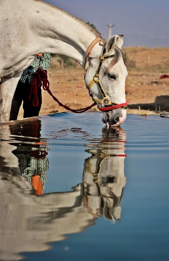 Horse  by Jazz Photography - Animals Horses ( jazz photography,  )