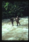 Papua. Tribes Baliem Valley Time Travel. Young Papua man helping an older one crossing the river
