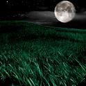 Night HD Video Wallpaper icon